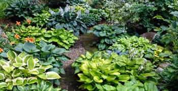Organic Landscaping Stockton Ca Chop Chop Landscaping Stockton Ca